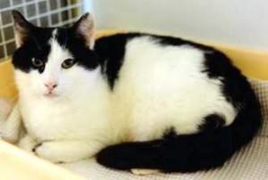 TamaraMorbida gatta di circa 3 anni, tranquilla e discreta. Vaccinata, sterilizzata e testata negativa a FIV/FELV