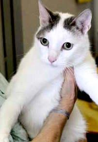 WesleyE' coccolone con le persone e socievole con gli altri gatti. Nato a Maggio 2014, è vaccinato, sterilizzato e testato negativo a FIV/FELV