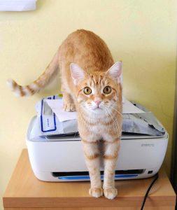 RomeoNato a giugno 2014. Vaccinato, sterilizzato e testato negativo a FIV/FELV. Era stato adottato ai primi del 2015, ma a malincuore l'hanno dovuto riportare perché subiva l'altro micio di casa. È molto affettuoso ed è meglio un'adozione come gatto unico