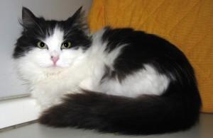 Valerysorella di Victor, è di taglia piccola e batuffolosissima. Nata a maggio 2015 e già vaccinata, è ancora un po' timida