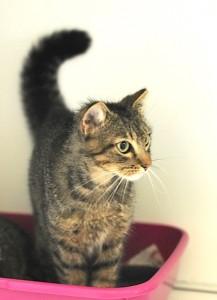 OndinaBuffa gattina nata a marzo 2015, ha il pelo più lungo sulla testa e sulla schiena che la rendono molto particolare. E' già stata sterilizzata, vaccinata e testata FIV/FELV negativo